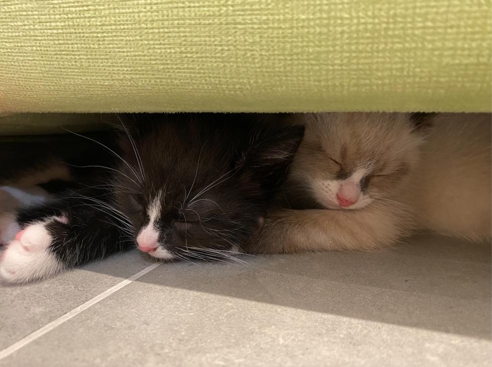 О котятках без умиления: как забрать котенка с улицы