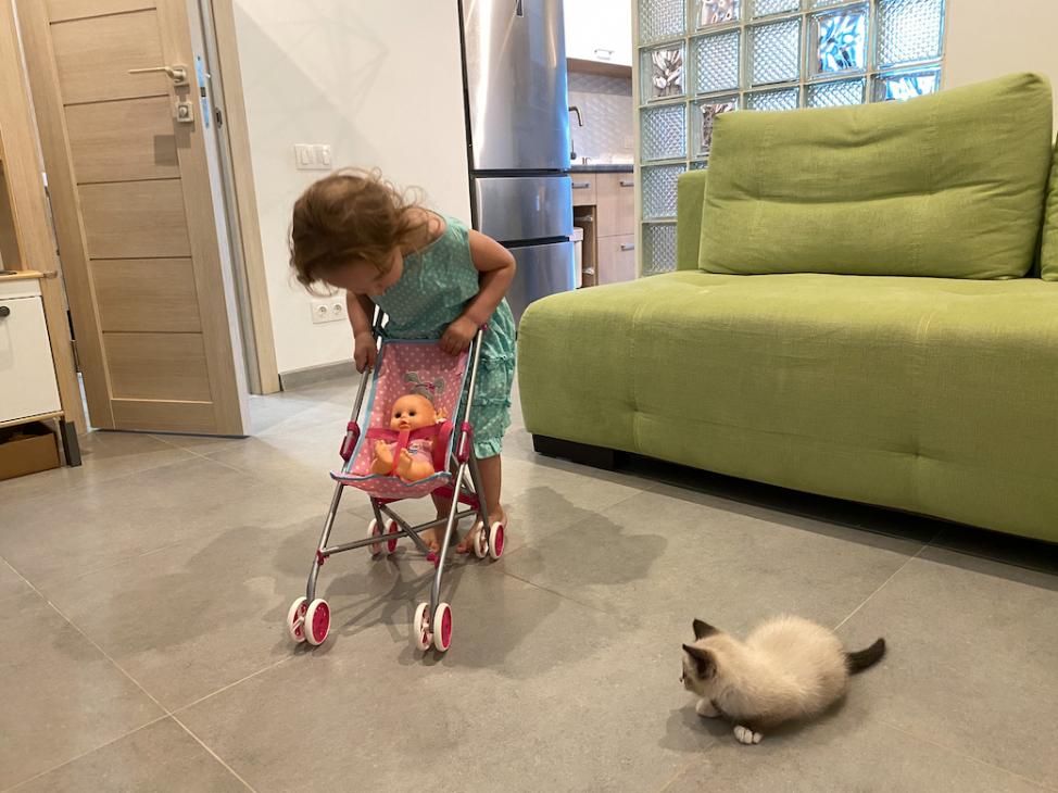 Как забрать котенка с улицы: ребенок учится заботиться о котенке