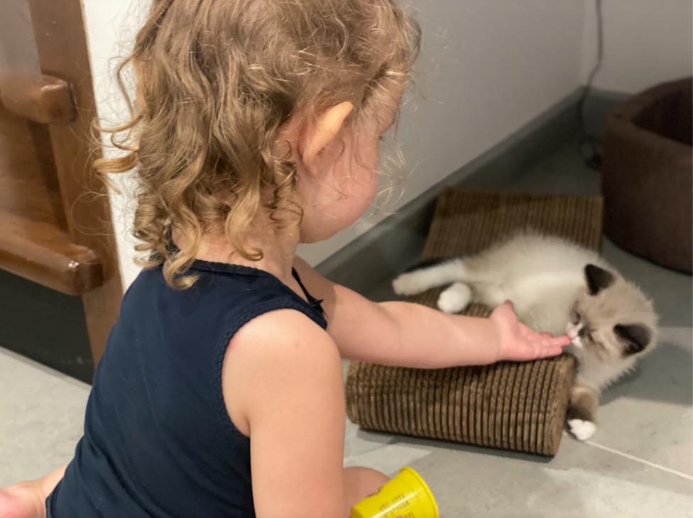 Ребенок учится заботиться о котенке